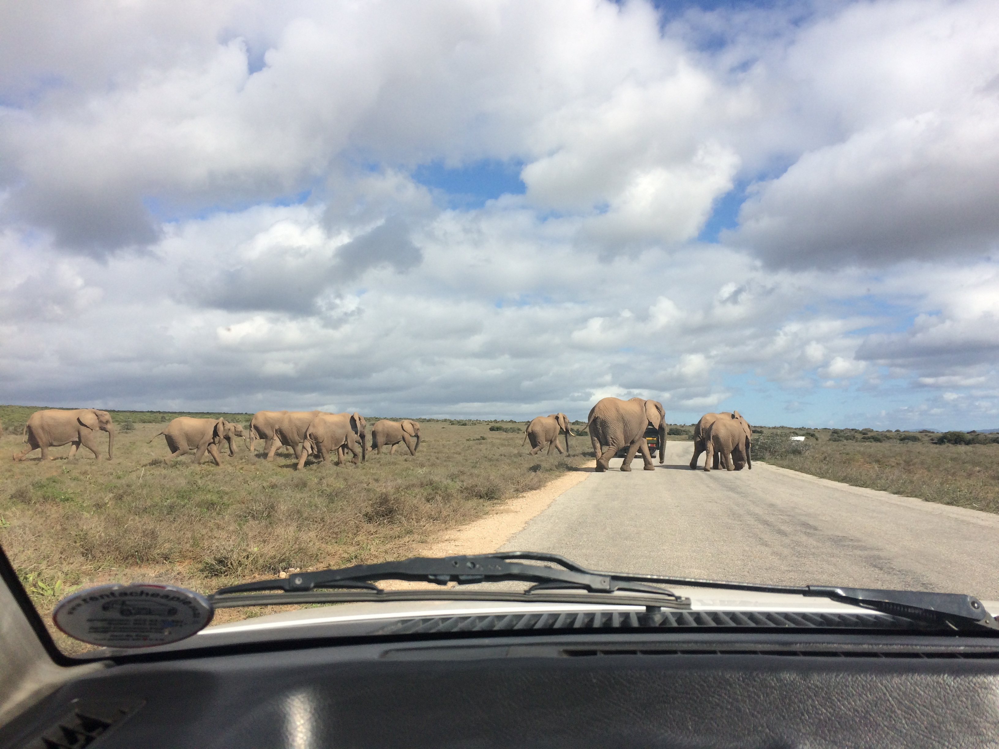 Safari im Addo Nationalpark