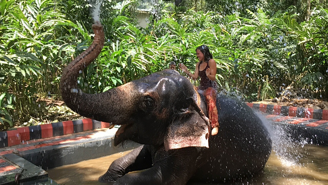Elephant Sanctuary in Thekkady, Kerala